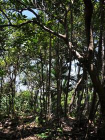 Yuibera Yuwi Trail Logo and Images